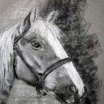 Cheval (fusain)